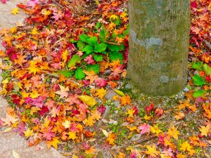 autumn-219137_1280