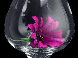 daisy-daisies-glass-macro