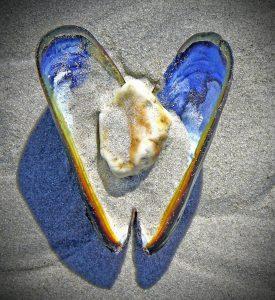 shell-597628_1280