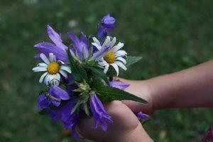 flowers-871555_1920