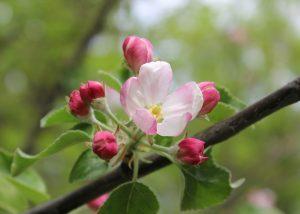 flowers-903495_1920